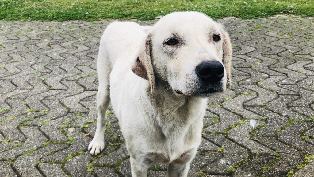 ジョージアは野良犬を街犬として可愛がっている