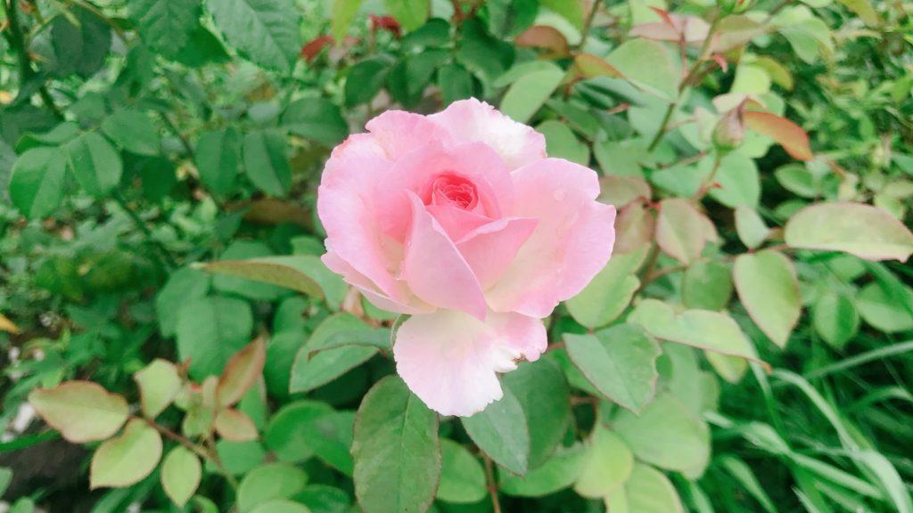 お花も綺麗な季節
