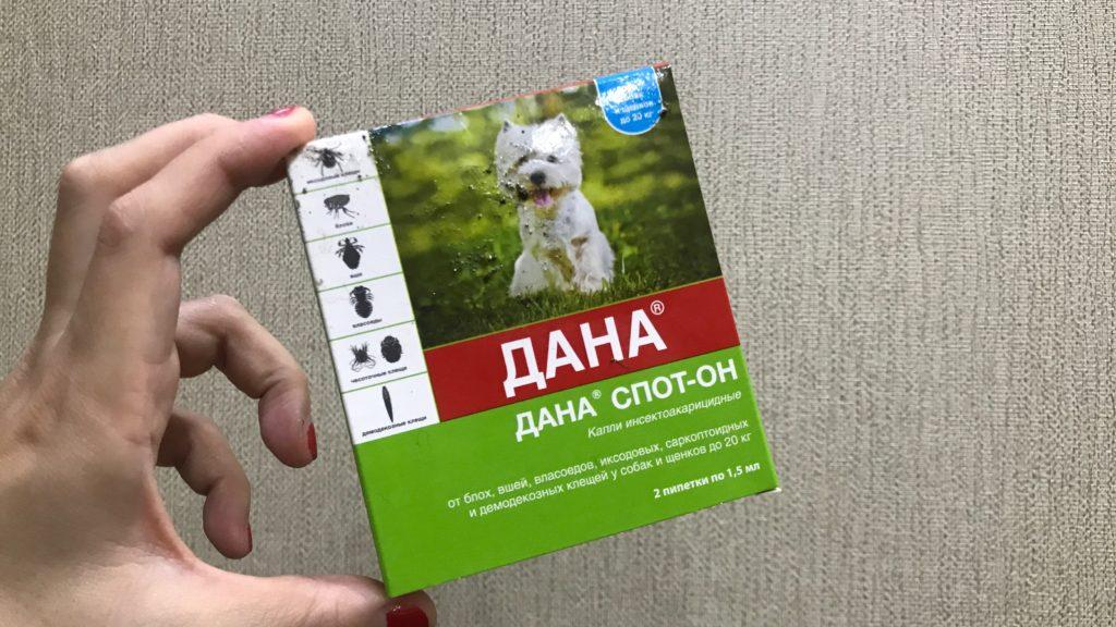 子犬、小さな犬用の薬