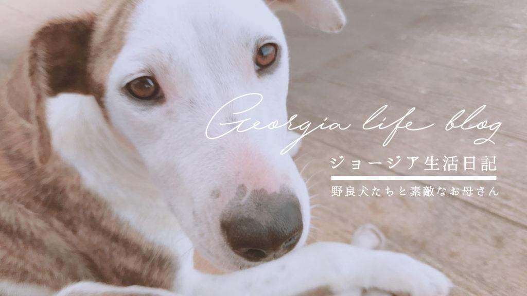 ジョージアの野良犬は本当にかわいい