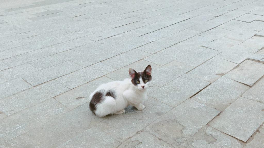 ジョージアには猫もいるよ ジョージア犬猫 保護