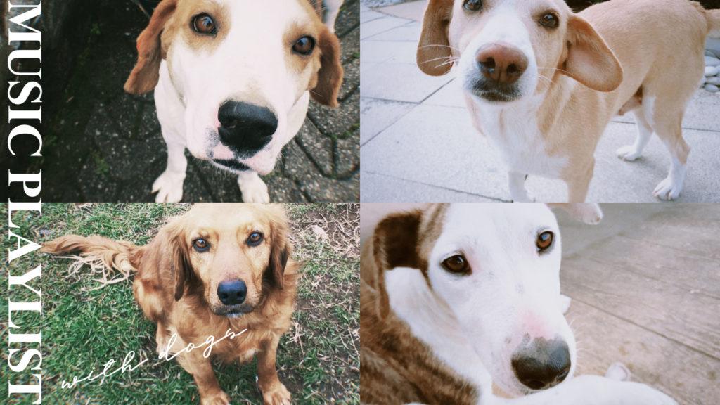 ジョージアの犬たち かわいい!